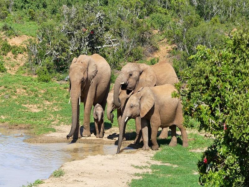 Africa: gli elefanti in pericolo salvati dai satelliti